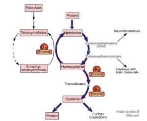 Homocysteine_Part_1