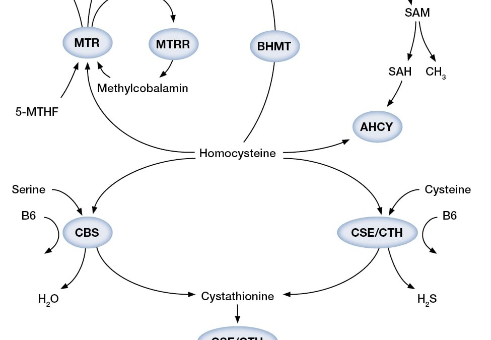 Part 4: Homocysteine and the Transsulfuration Pathway